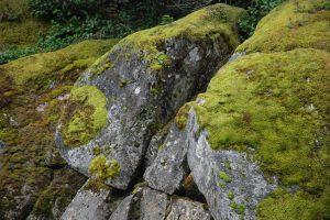 alpine falls 2015